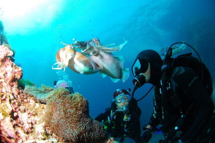 diving-689831_1280