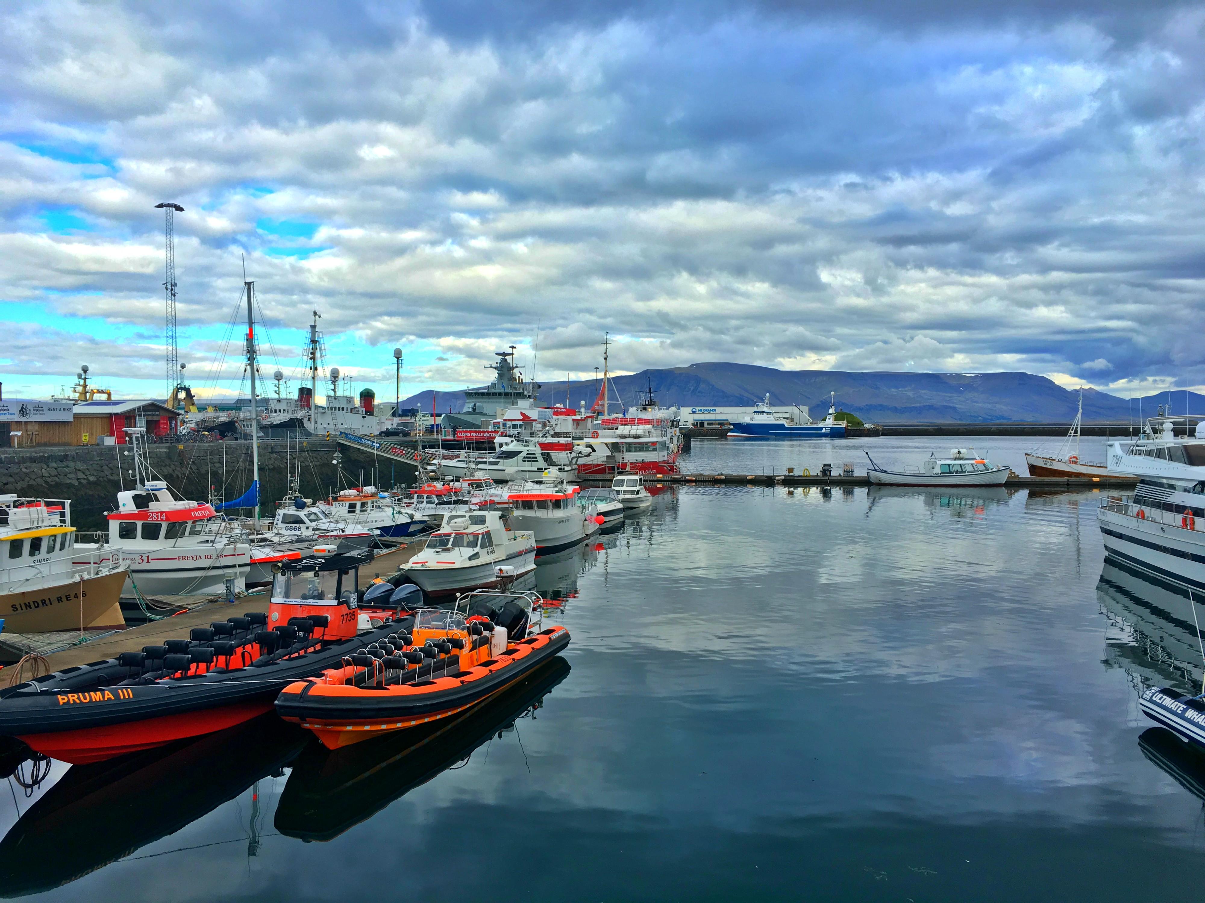 Elding Whale Watching Tour, Reykjavik