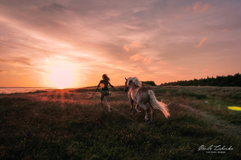 Horse Photo Tour — Explorer Tour: Heavy Horses & Wildlings in Germany