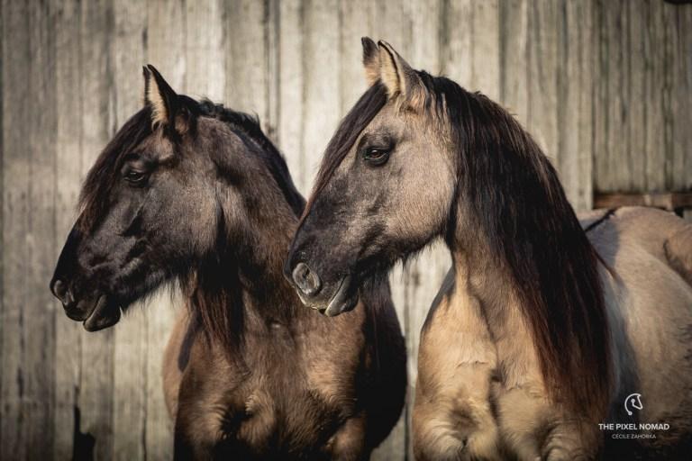 Horse families