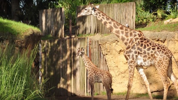 Animal Kingdom's Newest Baby Makes Her Debut