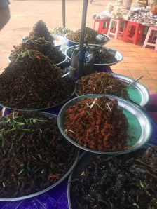 Insect buffet