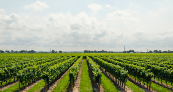 This environmentally friendly pesticide may change farming ...