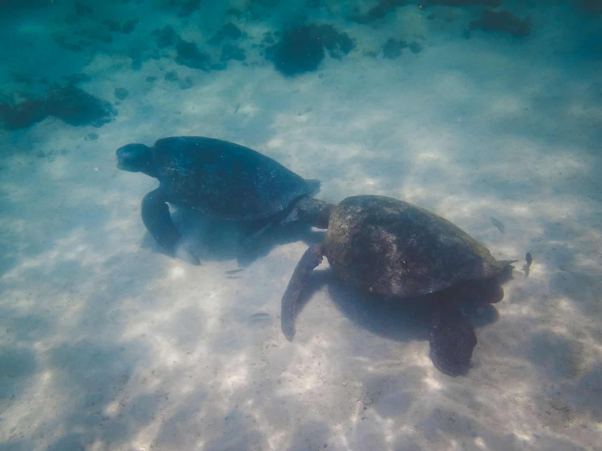 galapagos islands marinelife sea turtles