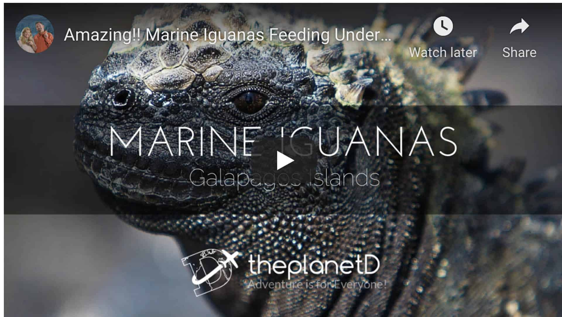 animals of the galapagos islands video