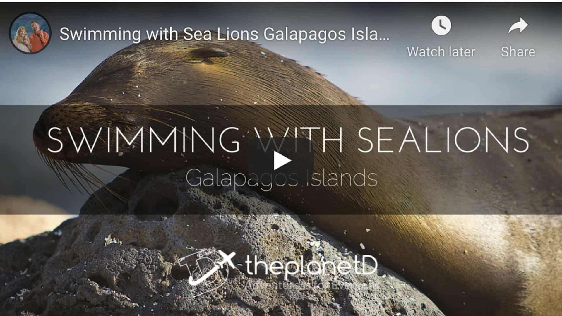 sea lions of the Galapagos Islands