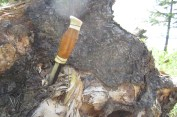 The knife that Solaris made himself sits in a pine stump as he collects the roots.