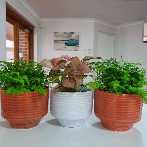 Pot/planters perth