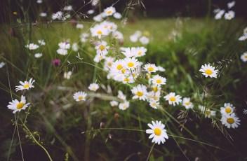bloom-1867139_640
