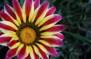 flower-1264294_1280
