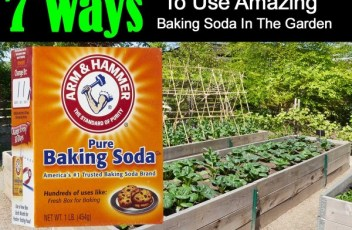 7-baking-soda-uses