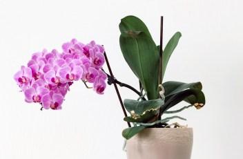flower-2029607_1280