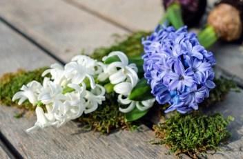 hyacinth-2119049_1280
