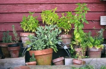 herb-garden-2294487_1280
