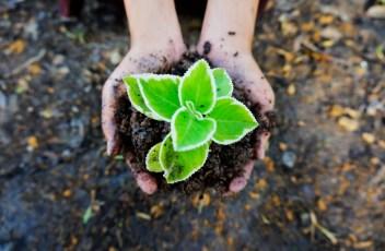 seedling-1558599_1280