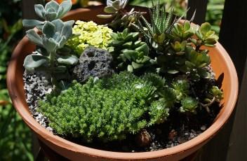 succulent-garden-1444240_1920