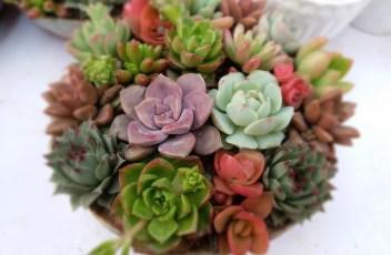 succulent-plants-2045388_1280