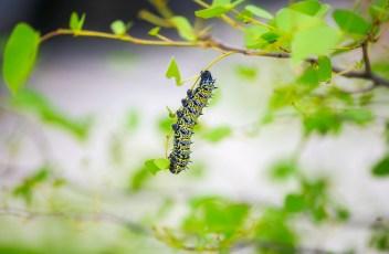 caterpillar-1993710_1280