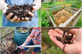 composting-1011