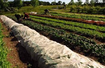 market-gardener