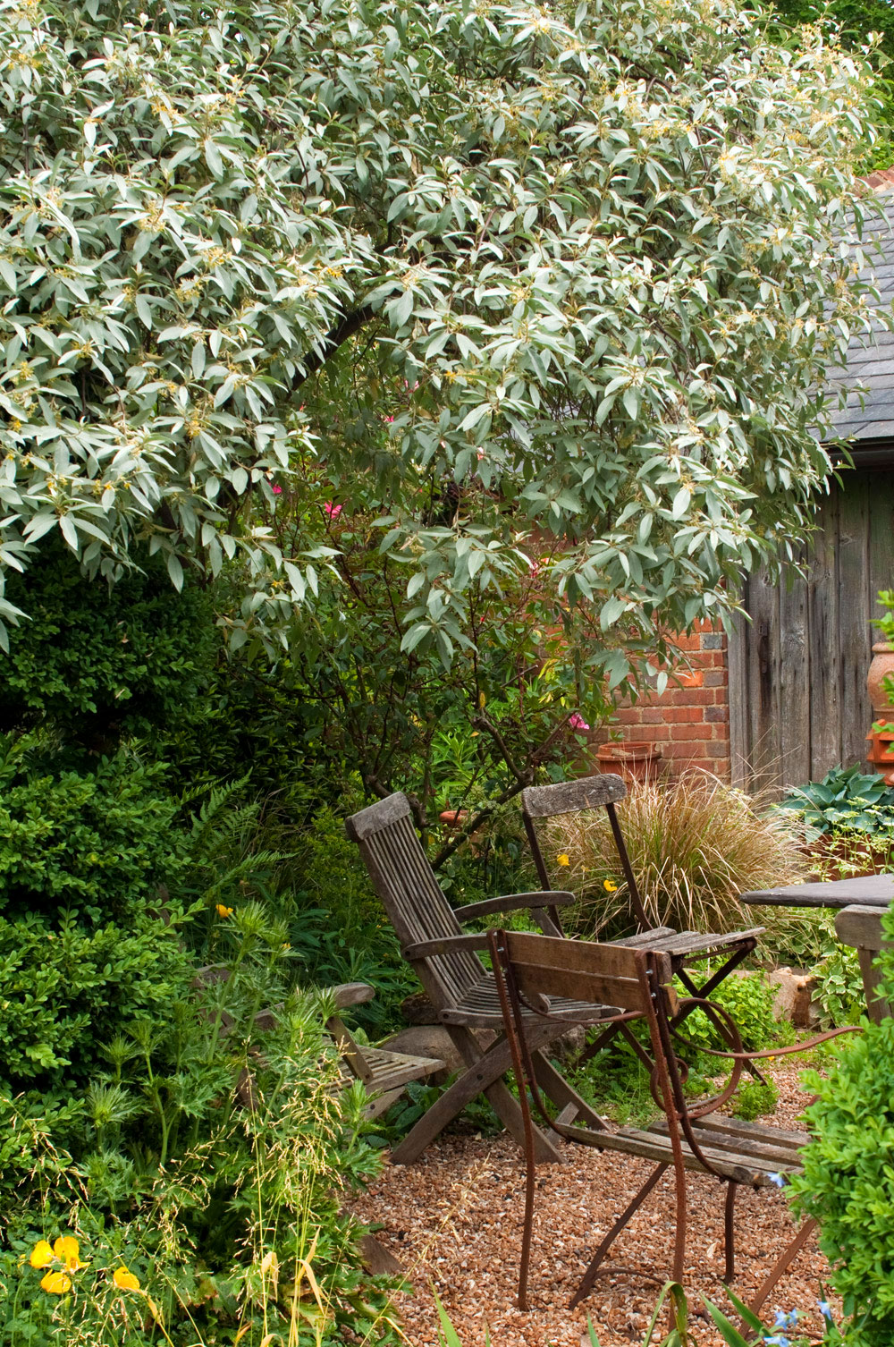 Garden Design, Topiary & Dead Dogs - The Planthunter