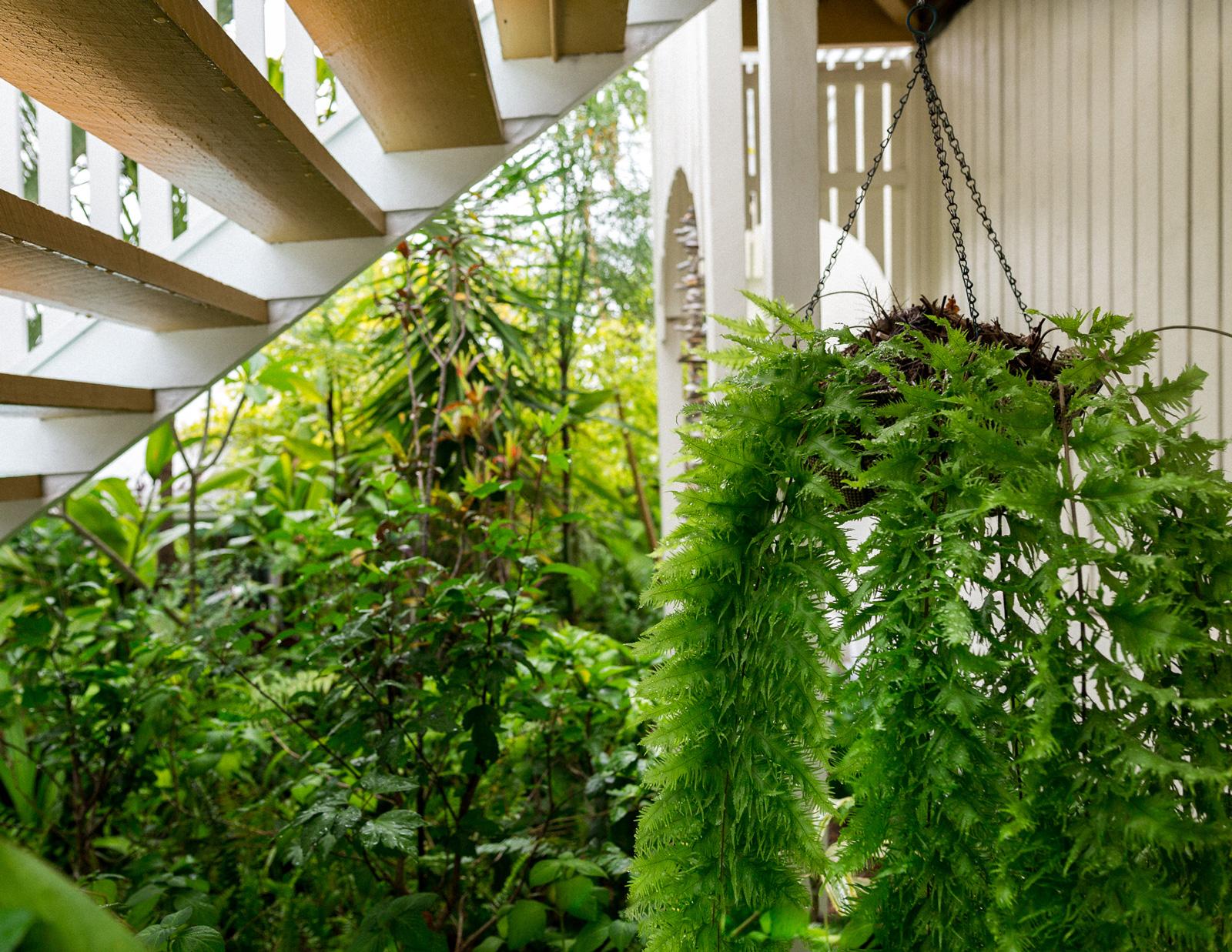 incredible tropical garden brisbane | A Tropical Brisbane Garden Wonderland - The Planthunter