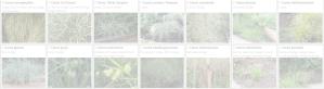 Carex | Copyright 2016 The Plantium Company. | www.theplantium.com