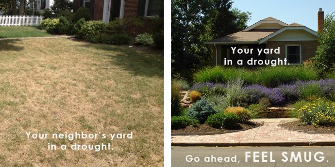Yard Drought