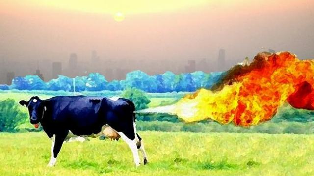 Cows methane fart