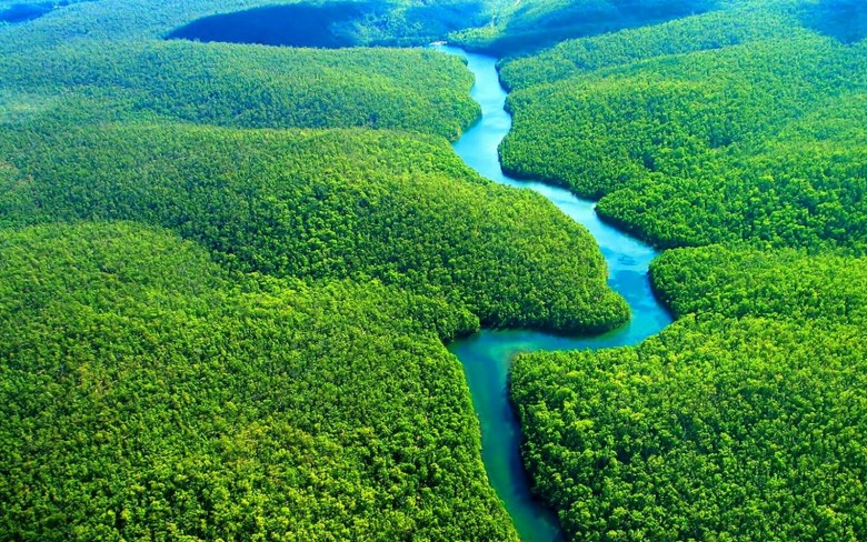 The Amazon Rainforest. The French Elite will save this instead of Notre Dame.
