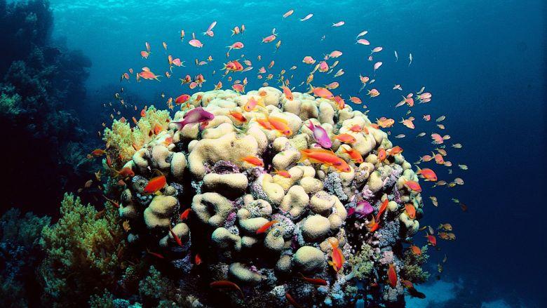 Coral Reef building a beautiful habitat