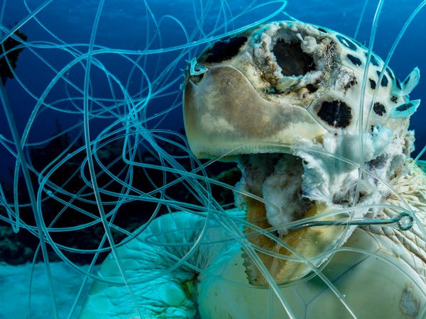 Turtle trapped at the Great Pacific Garbage Patch