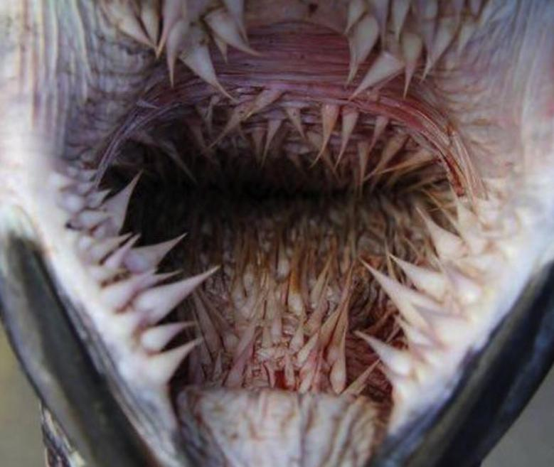 Leatherback Turtle Mouth