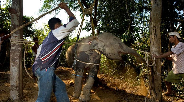 UN bans Elephants