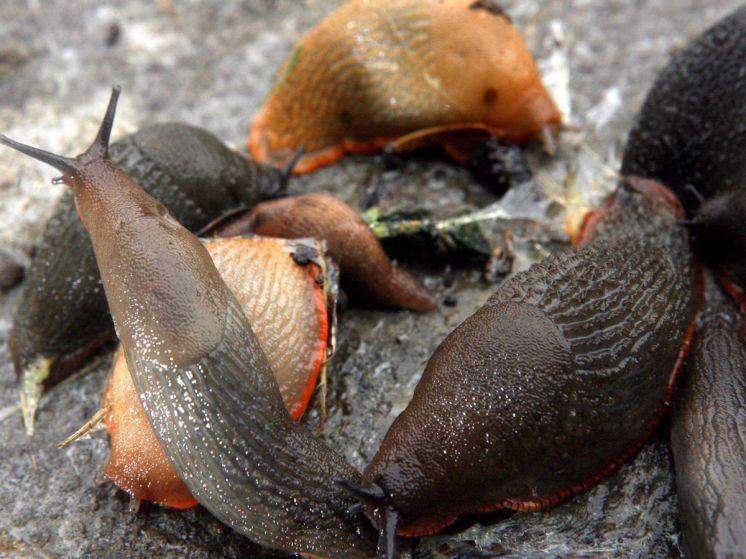 Teenage Slugs