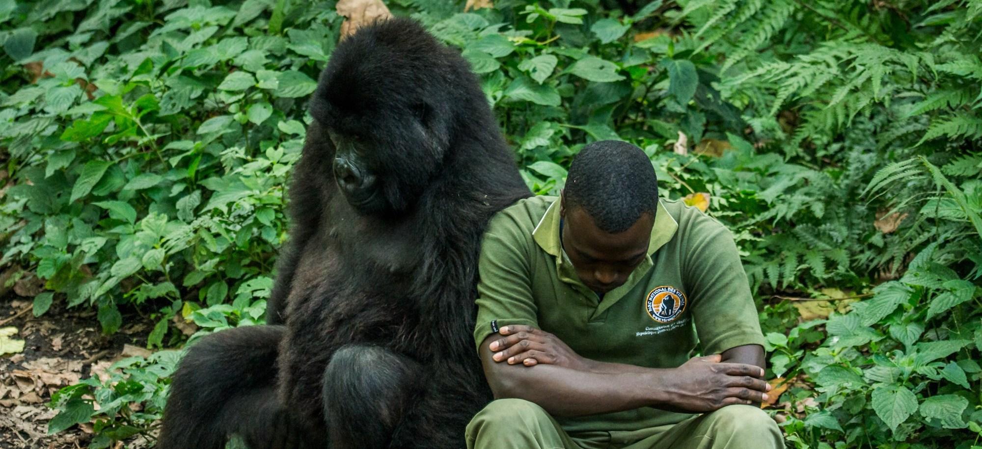 Shocking Virunga Killings