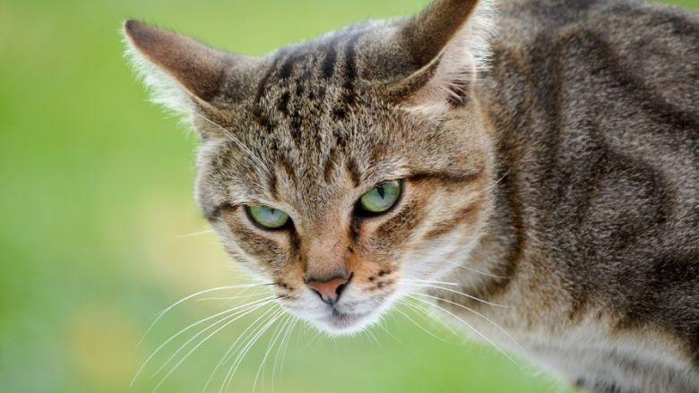 Cats Furious