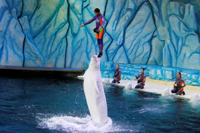 Booming Chinese Aquariums