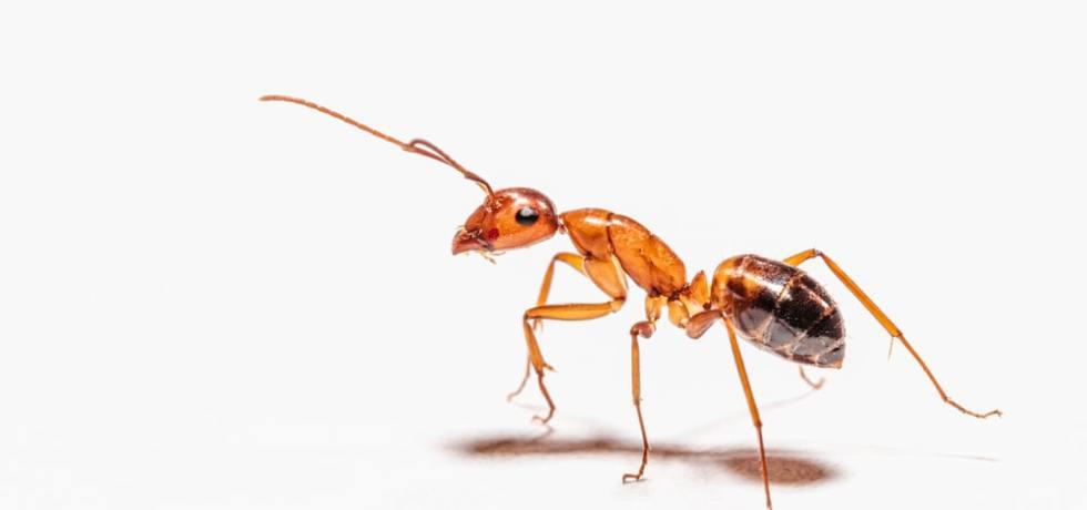 Ants Start