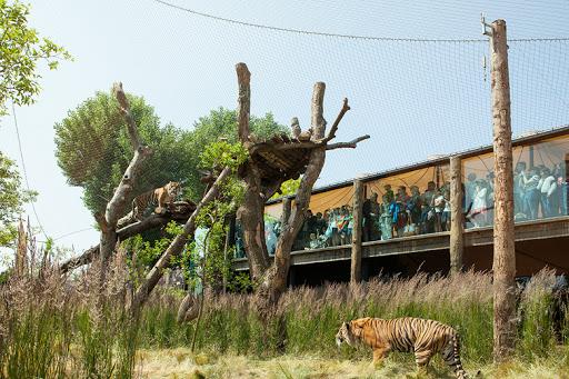 Zoo Animals Struggling