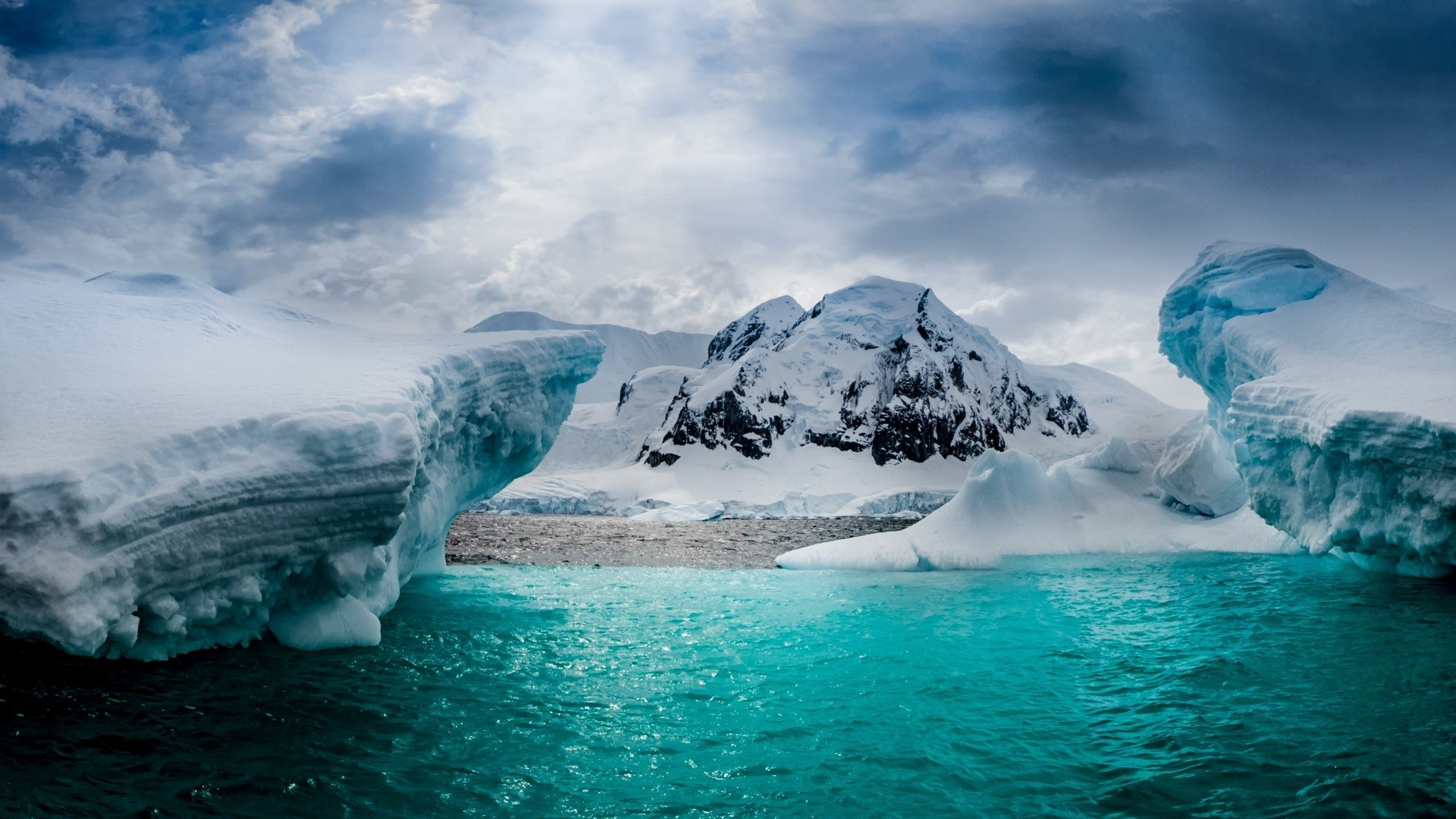 New Species in Antarctica