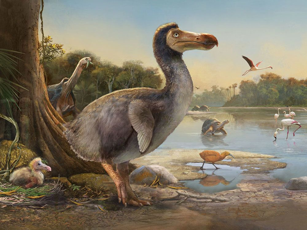 What Happened to the Dodo?