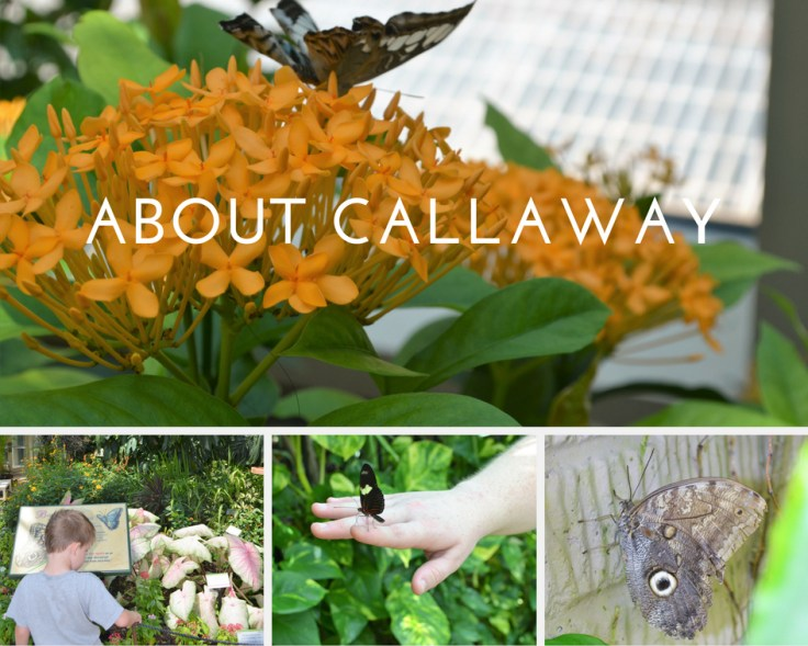 ABOUT CALLAWY