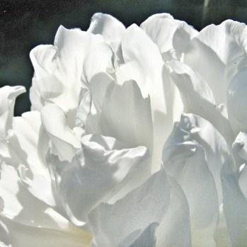 Blanc Atelier Des Ors