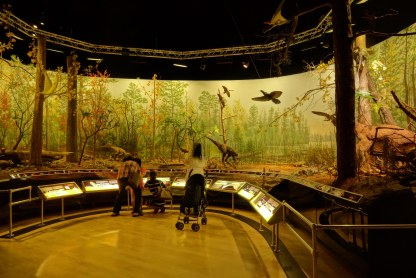 One of the sections of the museum was about Dinosaurs. Here is a display of the various ancient animals.