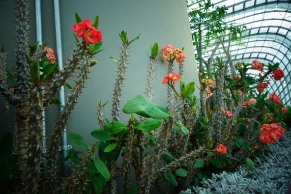 Beautiful cacti!