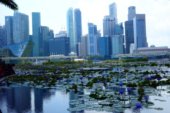 Singaporean skyline with purple lotuses