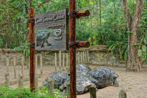 Four ninja turtles