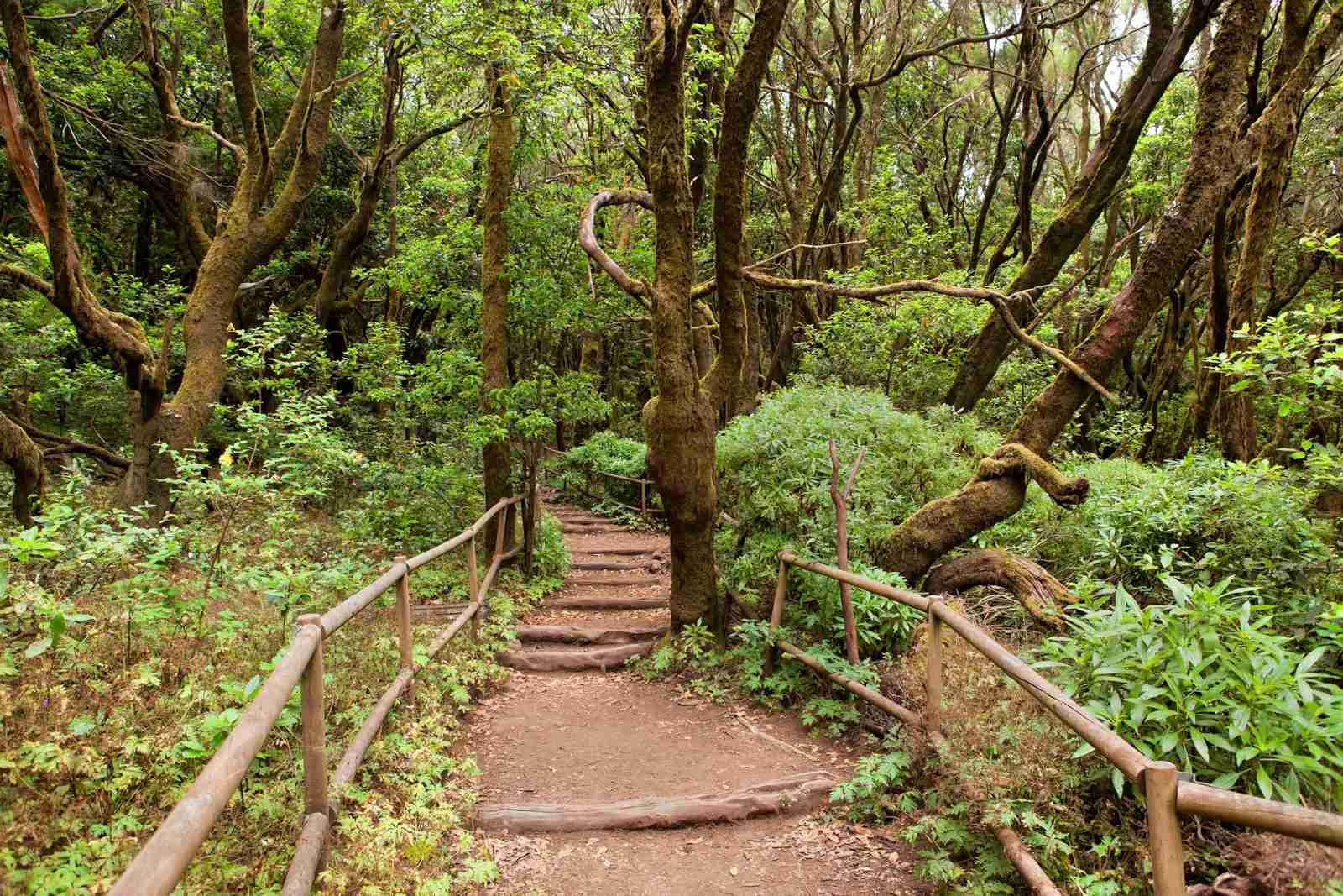 The rainforest in La Gomera, Parque Nacional de Garajonay, Canary islands, Spain. (Photo by nodff / Shutterstock)