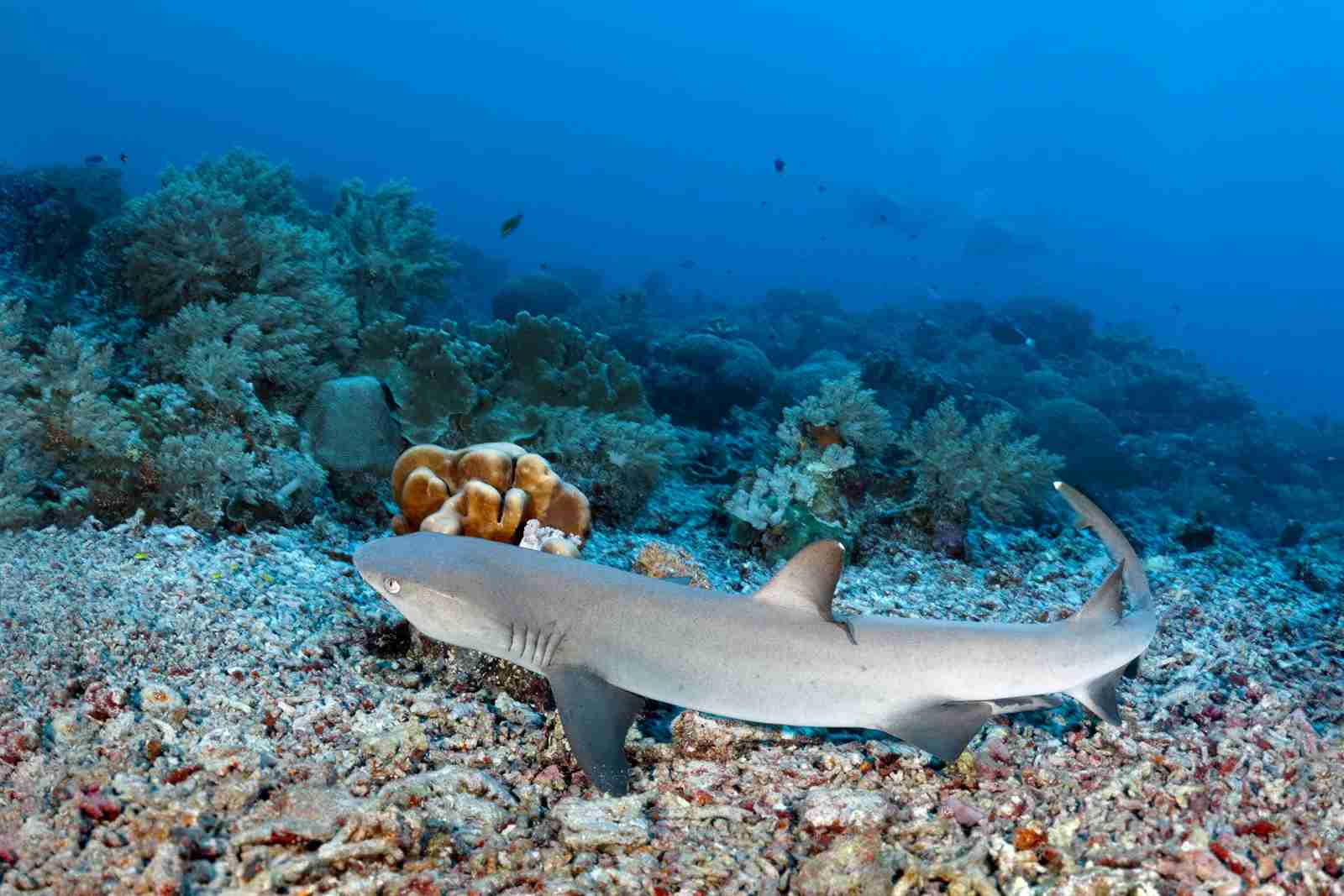 Tubbataha Reef National Marine Park in the Phillipines. (Photo by imageBroker/Norbert Probst/Getty Images)